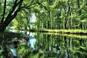 igneada longoz ormanları